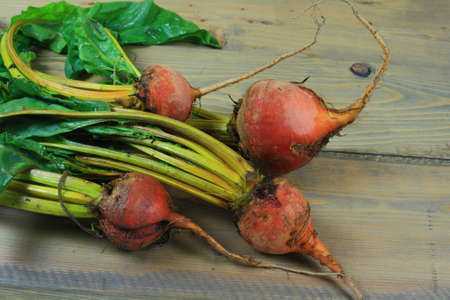 Fresh harvested from the soil and washed Bunch of Golden Beets (edible golden colored tuberous roots and good for human consumption green leaves) over the wooden garden table. Golden beet is vegetable