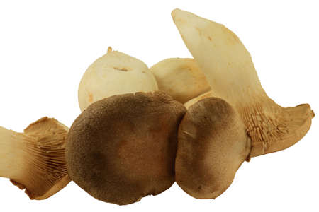 Group fresh raw organic King Oyster Mushrooms taken (cut) from the soil isolated over white background Stock Photo