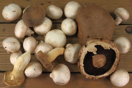 Assorted types of raw organic mushrooms: whole white, portobello, King oyster, over the wooden table Stock Photo