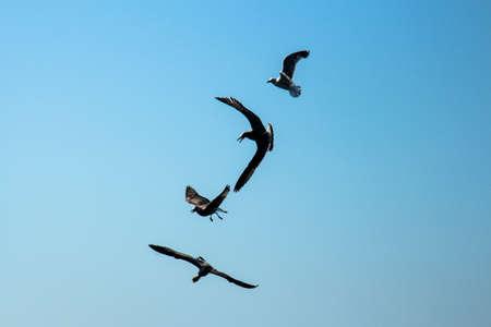 aloft: gulls aloft Stock Photo
