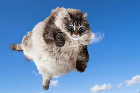 divertido gato volando en el cielo