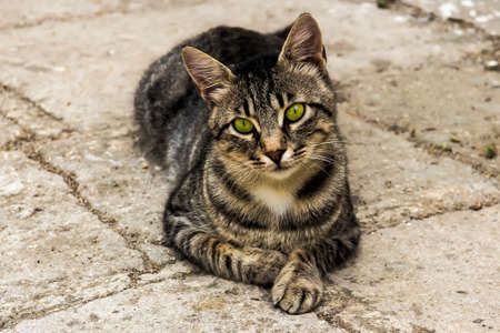 stray: stray cats on the streets of the resort town Stock Photo
