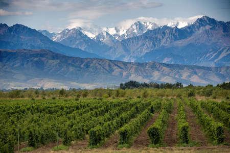 Wijngaarden en de lucht Stockfoto