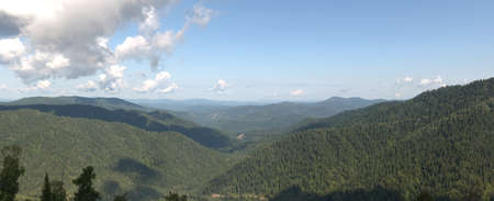 Panoramic shot of coniferous forest under a blue sky in white clouds from the top of the mountain. Siberian taiga, Altai.