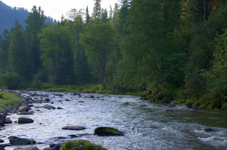 A shallow mountain river flowing through a coniferous forest. Altai, Siberia, Russia.