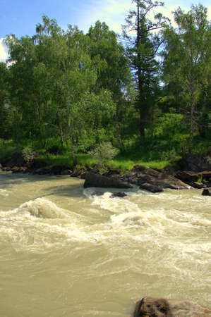 A fragment of a stormy mountain river with stony banks overgrown with forest. Chuya, Altai, Siberia, Russia.