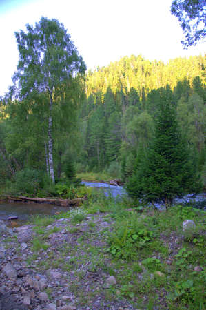 A shallow stony river winds through a beautiful morning forest. Sema River, Altai, Russia.