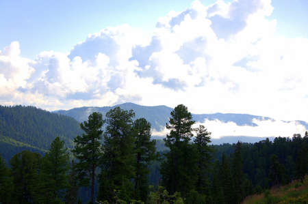 A look through the pines to the tops of the mountains in the clouds. Altai, Siberia, Russia.
