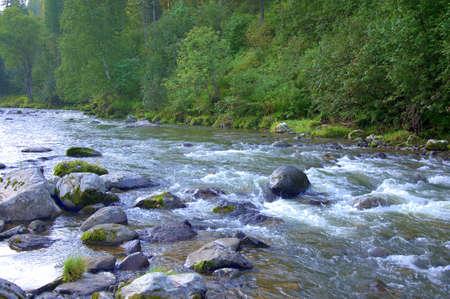 Ein Strom eines turbulenten Flusses, der schnell durch den übertriebenen Wald fließt und auf seinem Weg Steinblöcke umgeht. Iogach-Fluss, Altai, Sibirien, Russland.