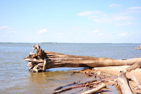 A dumped tree trunk lies on the sandy shore with roots in the water of a large lake. close-up. Stock Photo