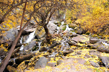A stormy stream flowing down from the mountains through the autumn forest, through stone boulders and heaped tree trunks. Boki river, Altai, Siberia, Russia.