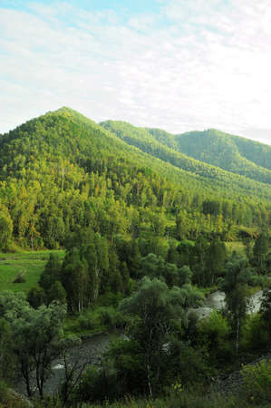 A view of the high mountains overgrown with coniferous forest under a cloudy blue sky and the river flowing at the foot. Sema River, Altai, Siberia, Russia.