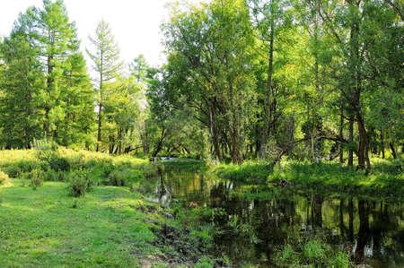 A small calm river flowing through a quiet summer birch forest. Karakol River, Altai, Siberia, Russia. Standard-Bild