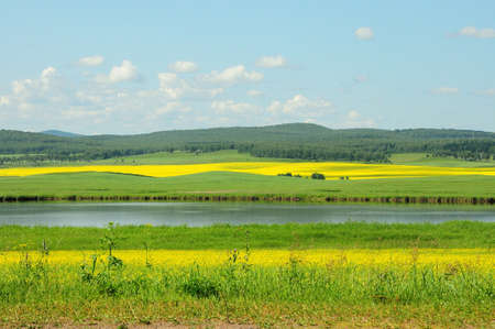 A large calm lake surrounded by hilly fields with blooming buckwheat, under a warm summer cloudy sky. Khakassia, Siberia, Russia.