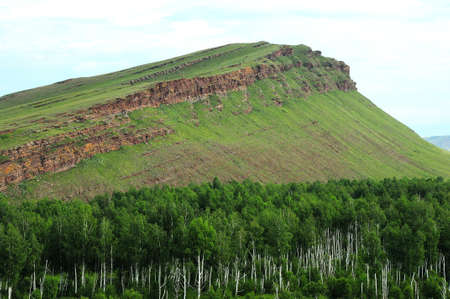 A large birch forest at the foot of a high cliff overgrown with grass. Fourth Chest, Khakassia, Siberia, Russia.