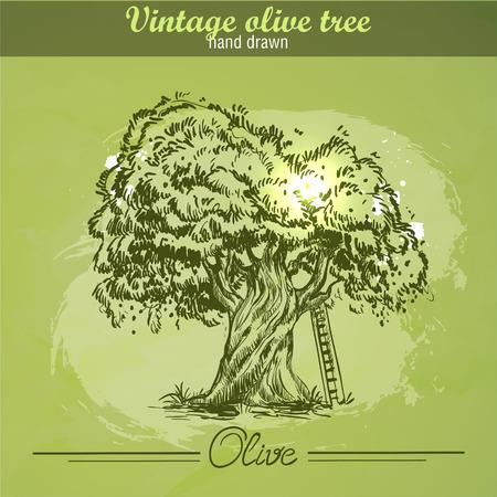 plant tree: Vintage hand drawn olive tree on watercolor grunge background Illustration