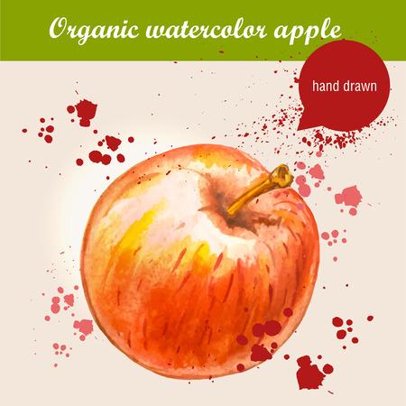manzana: Vector acuarela dibujado a mano manzana roja madura con gotas de acuarela. Ejemplo de la comida org�nica.