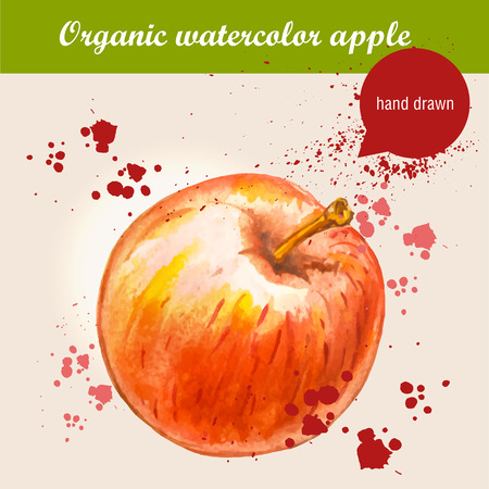 red apple: Vector watercolor hand drawn ripe red apple with watercolor drops. Organic food illustration.