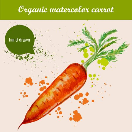 halm: Vector watercolor hand drawn carrot with leaves and watercolor drops. Organic food illustration.