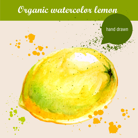 sour: Vector watercolor hand drawn sour lemon with watercolor drops. Organic food illustration.