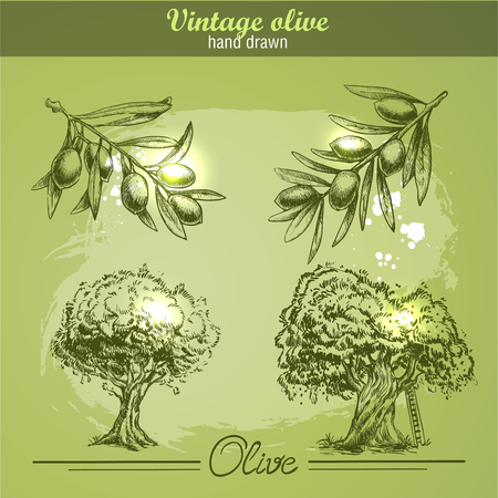 olive tree: Vintage hand drawn set of olive branch tree and bottle. Sketch style. Watercolor grunge background.