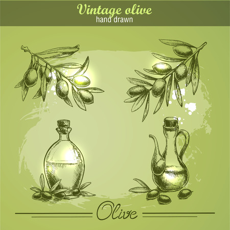 engrave: Vintage hand drawn set of olive branch tree and bottle. Sketch style. Watercolor grunge background.