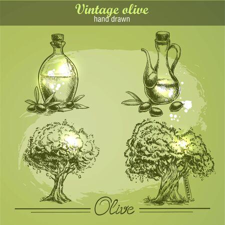 arboles frutales: dibujado mano Vintage conjunto de olivo y de la botella. el estilo de dibujo. Fondo de la acuarela del grunge. Vectores