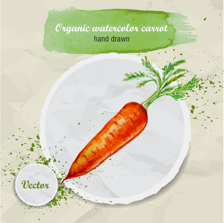 root crop: Vector watercolor hand drawn carrot with leaves and watercolor drops on round paper piece. Organic food illustration.