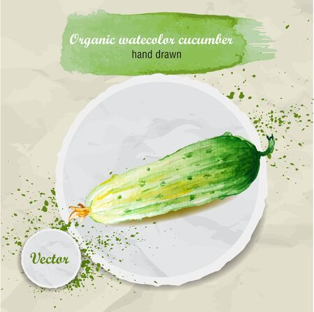 watercolor paper: Vector watercolor hand drawn fresh organic cucumber on round paper piece with watercolor drops. Organic food illustration.