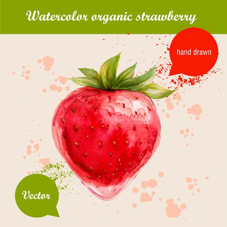 Vector watercolor hand drawn red strawberry with watercolor drops. Organic food illustration. Vettoriali