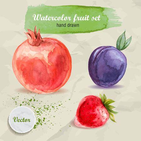 Vektor Aquarell von Hand gezeichnet Obst auf Papier mit Aquarelltropfen gesetzt. Vektorgrafik