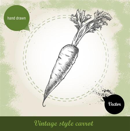 raíz de planta: Dibujado a mano zanahoria. eco de vegetales orgánicos ilustración del estilo del bosquejo Fondo del alimento Vectores