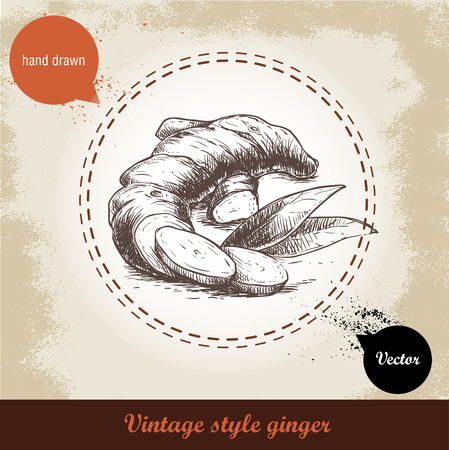 ginger root: Ginger root illustration. Vintage retro background with hand drawn sketch ginger root. Herbs and spices vector illustration