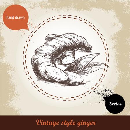 Racine de gingembre illustration. Vintage rétro fond avec la main dessiné croquis racine de gingembre. Herbes et épices illustration vectorielle