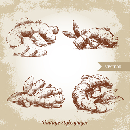 Ginger root set. Vintage retro background with hand drawn sketch ginger root. Herbs and spices vector illustration