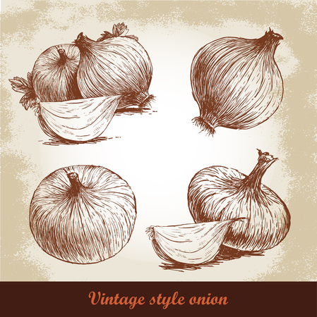 onions: Onion hand drawn set. Vintage retro background with hand drawn sketch onions. Herbs and spices vector illustration