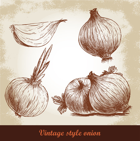 Onion hand drawn set. Vintage retro background with hand drawn sketch onions. Herbs and spices vector illustration Banco de Imagens - 56013705