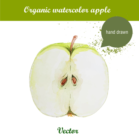 crispy: Vector watercolor hand drawn green apple with watercolor drops. Organic food illustration.