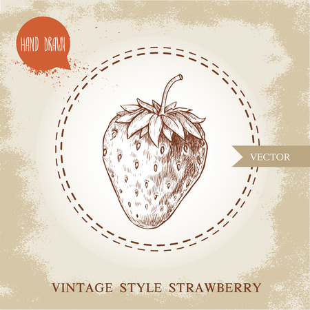 Hand drawn strawberry isolated on vintage background.Retro sketch style vector eco food illustration.