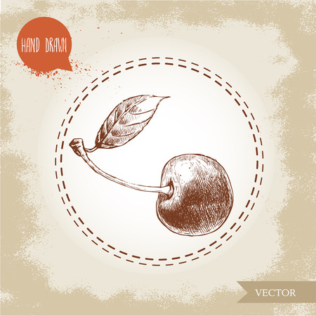 drupe: Hand drawn cherry isolated on vintage background.Retro sketch style eco food illustration