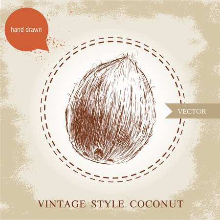 palm oil: Hand drawn coconut isolated on vintage background.Retro sketch style tropical food illustration. Illustration