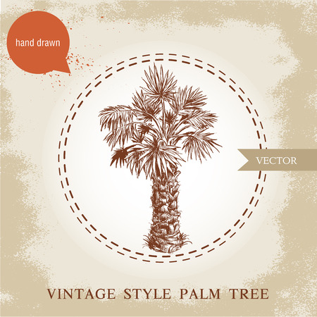 palm of hand: Hand drawn palm tree. Washingtonia sketch illustration on vintage grunge background. Travel and vacation symbol.