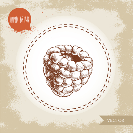 wild berry: Hand drawn raspberry isolated on vintage background.Retro sketch style vector eco food illustration