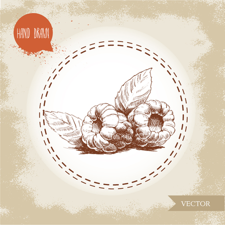 wild berry: Hand drawn raspberries isolated on vintage background.Retro sketch style vector eco food illustration