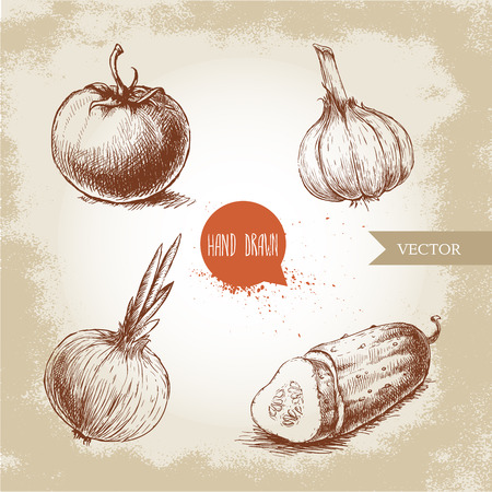 Set of hand drawn vegetables. Tomato, onion, sliced cucumber and garlic. Sketch style ecological food illustration.