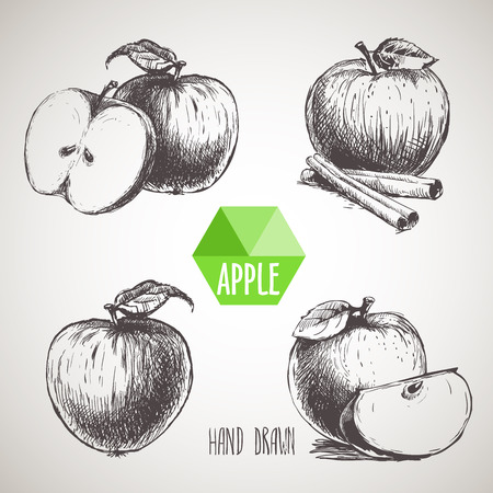 apple cinnamon: Set of hand drawn apple.  Organic eco food.Vector picture set