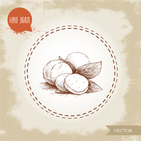 mozzarella cheese: Hand drawn mozzarella cheese with basil leafs. Vector organic food illustration. Vintage design. Illustration