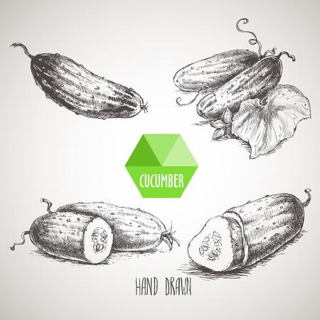 Ensemble de concombres dessinés à la main. Vintage style illustration croquis. alimentaire éco bio