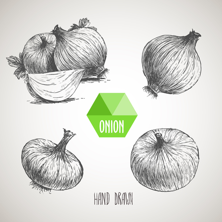 Onion hand drawn set. Herbs and spices vector illustration Stock Illustratie