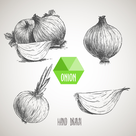 Onion hand drawn set. Herbs and spices vector illustration 矢量图像